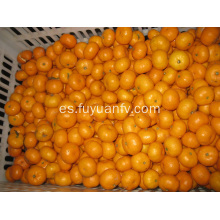 Fresh Good Qulality Baby Mandarin Orange